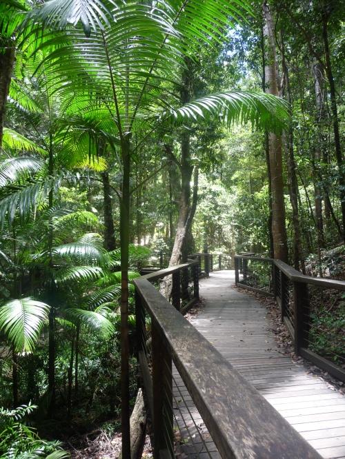 Boardwalk at Wanggoolba Creek