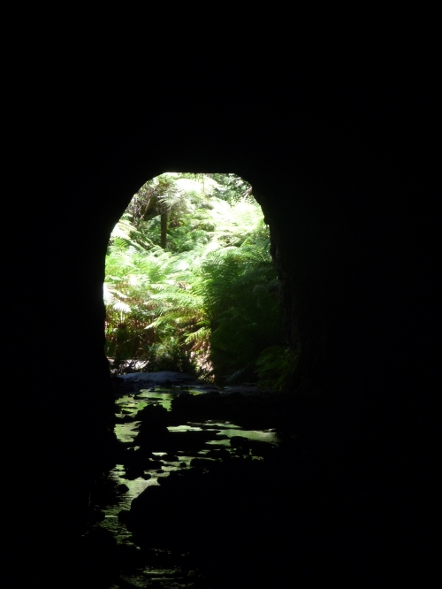 Inside the glow worm tunnel