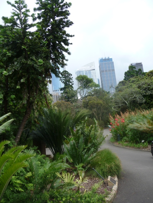 A glimpse of the city from the botanical gardens