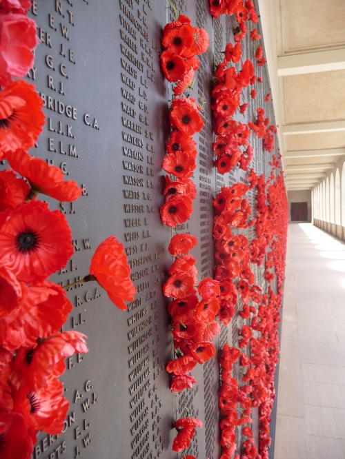Poppies along The Roll of Honour
