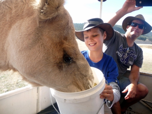 Reardon feeding the camel